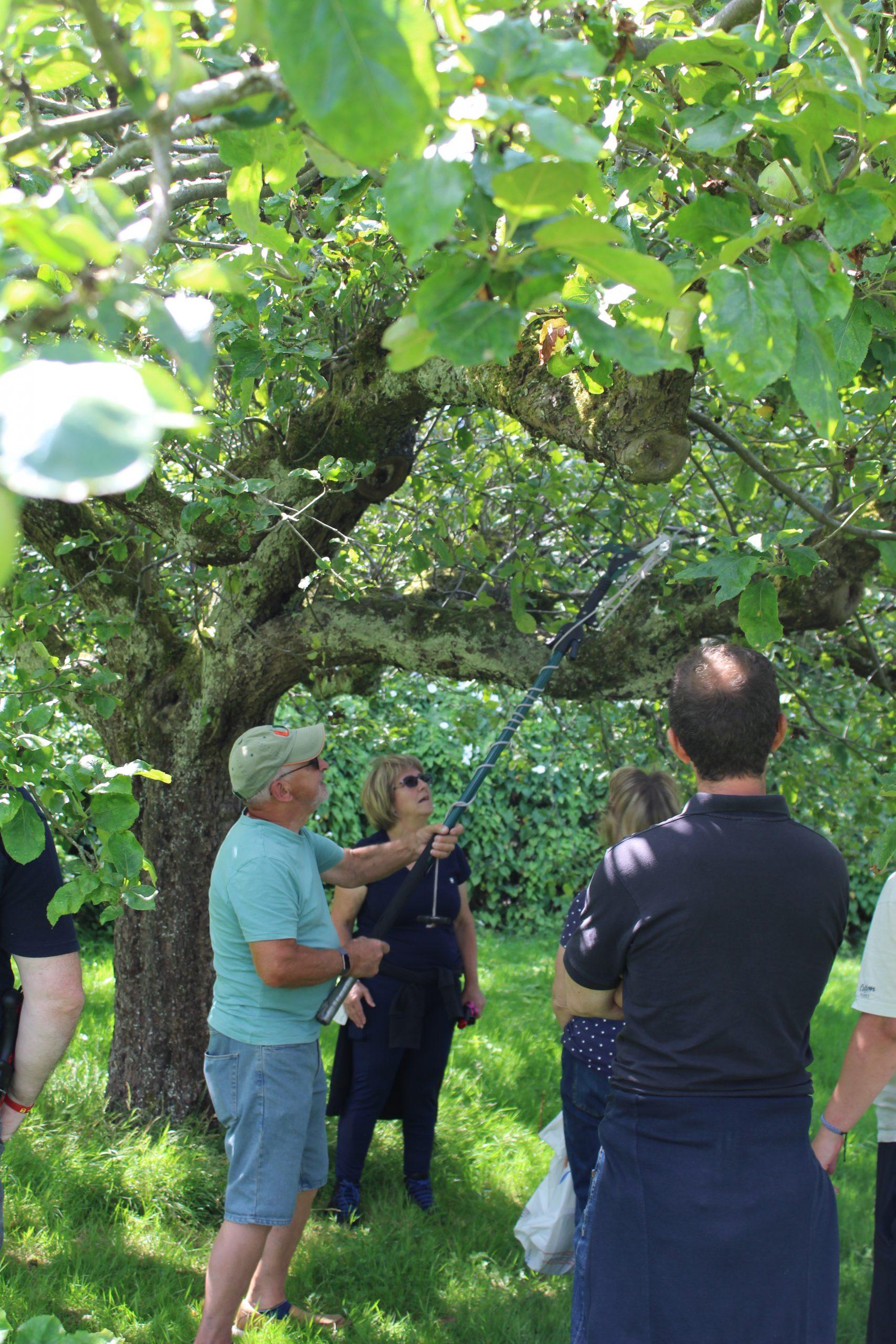 Summer Pruning 05/08