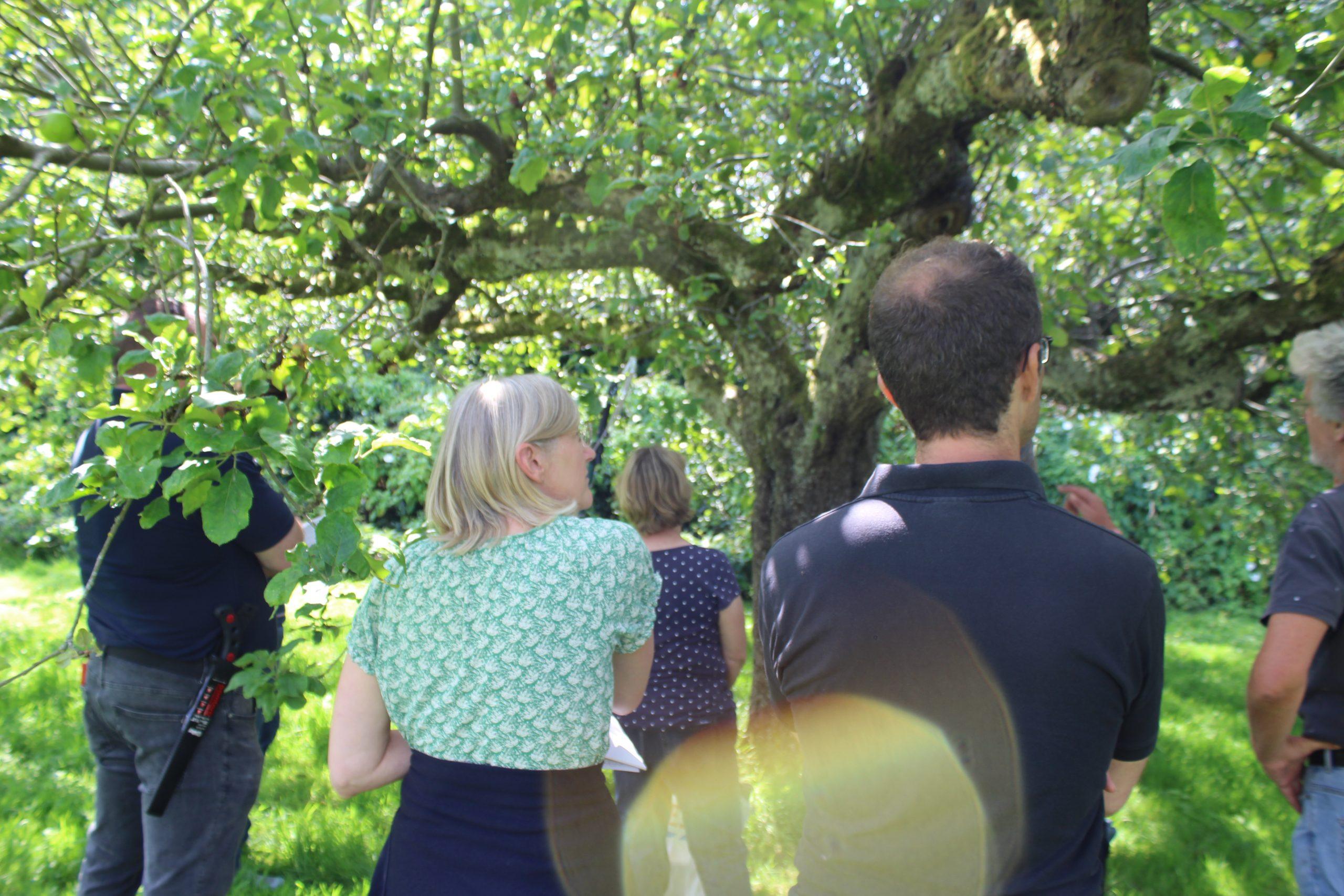 Summer Pruning- 05/08